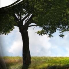 Wykluczenie wykonawcy zalegającego z opłatami za korzystanie ze środowiska